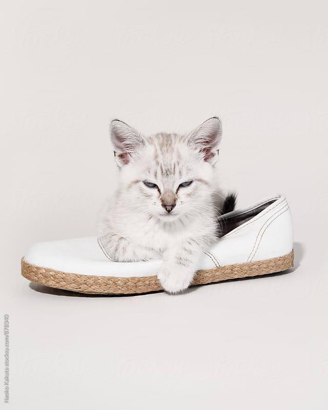 white cat sitting on a white shoe by Naoko Kakuta for Stocksy United