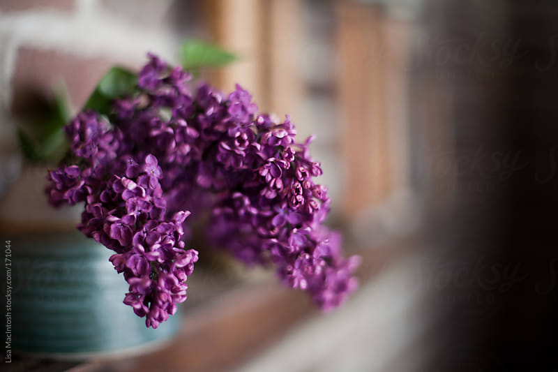 blue potter vase filled with purple lilacs sitting on wooden ledge by Lisa MacIntosh for Stocksy United