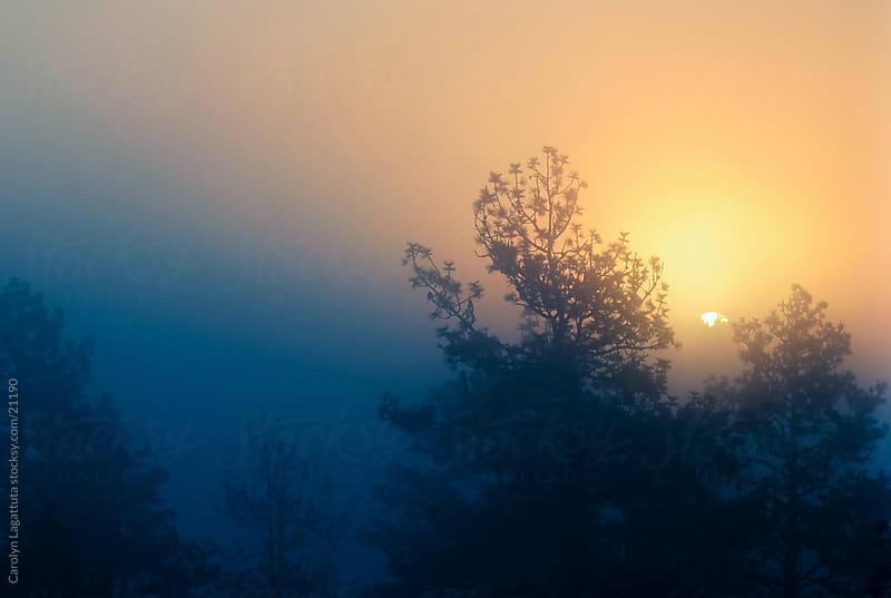 Sun rising through the thick fog and trees by Carolyn Lagattuta for Stocksy United