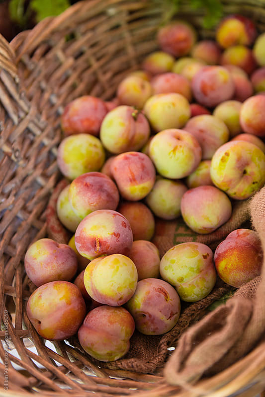 organic plums in a basket by Gillian Vann for Stocksy United