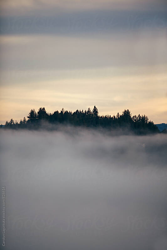 View of the treetops peeking out of very thick fog by Carolyn Lagattuta for Stocksy United