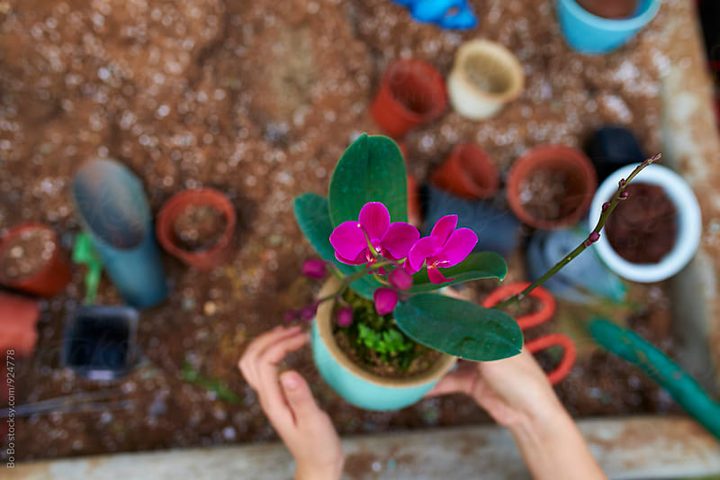 florist planting flower in pot by Bo Bo for Stocksy United