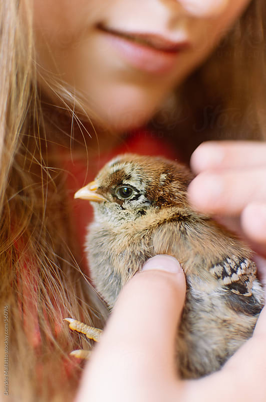 Girl Holding a Cute Baby Chick by Deirdre Malfatto for Stocksy United