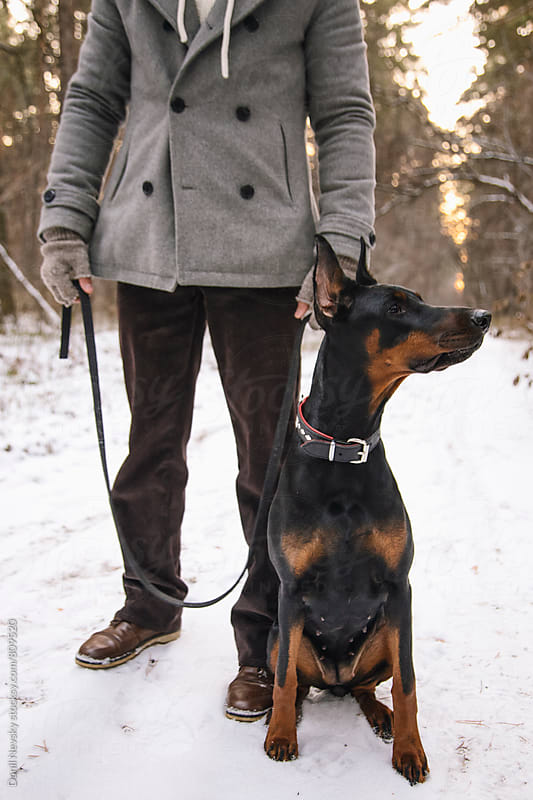 Beautiful Doberman sitting next to his owner by Danil Nevsky for Stocksy United