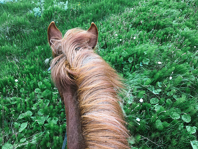 View from the back of a horse in Iceland by Christine Han for Stocksy United