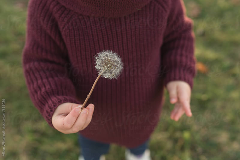 Child Holding Dandelion by Alison Winterroth for Stocksy United