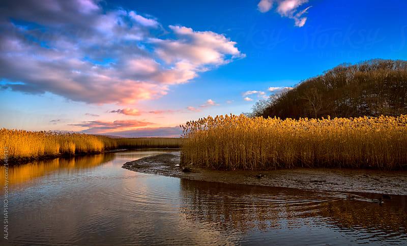 salt marsh by alan shapiro for Stocksy United