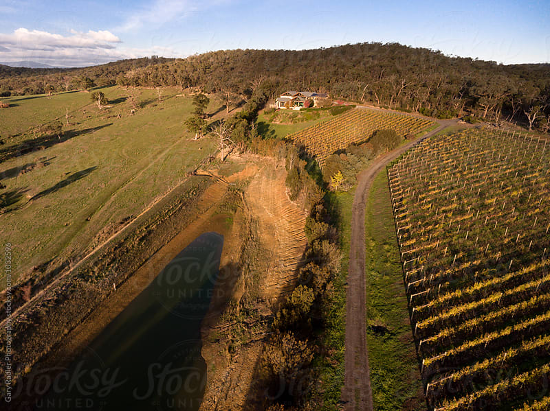 Vineyard in Victoria, Australia by Gary Radler Photography for Stocksy United