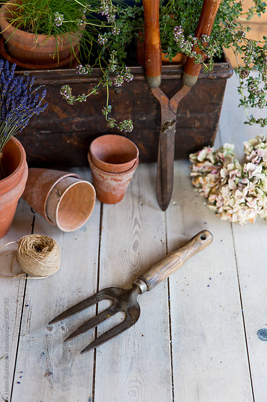 Vintage gardening tools, plant pots and metal chest.  by Helen Rushbrook for Stocksy United