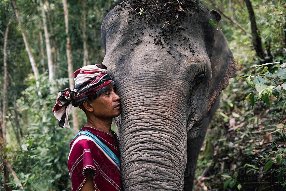 Resultado de imagen para elephant jungle sanctuary