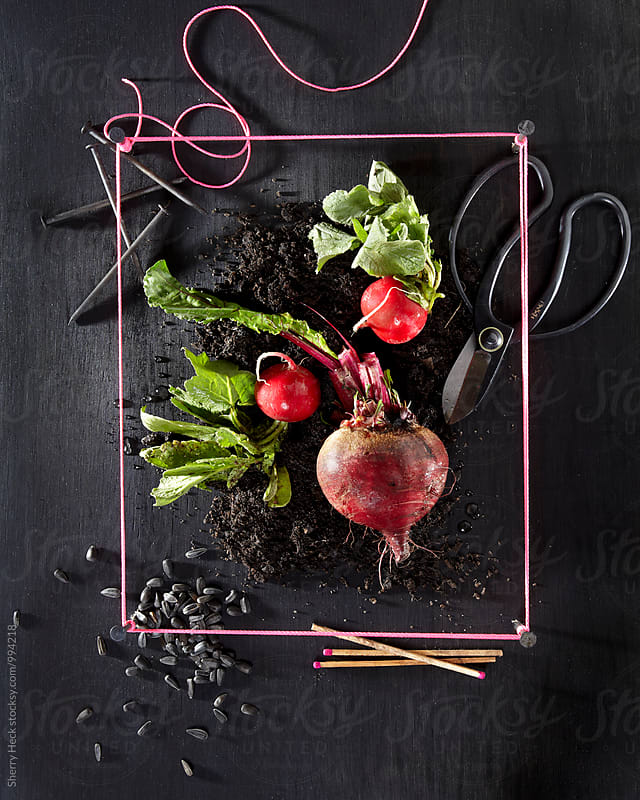 Still life of radish and beet with seeds on black stained wood by Sherry Heck for Stocksy United