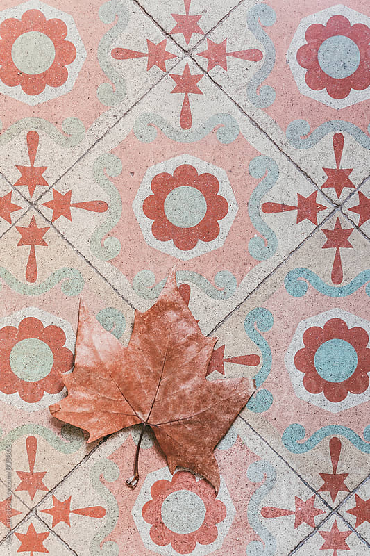Plane tree leaf on vintage tile by Vera Lair for Stocksy United