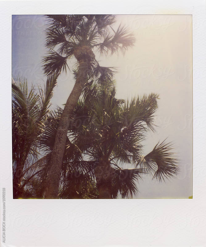 Palm Trees In The Summer Sun On Expired Polaroid Film by ALICIA BOCK for Stocksy United