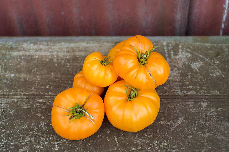 Golden Heirloom Tomato Variety by Rowena Naylor for Stocksy United