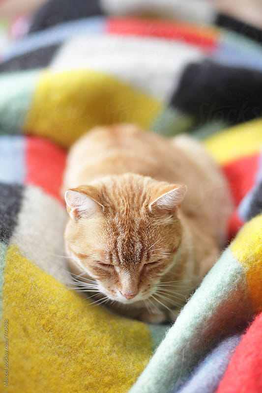Cat sleeping on colorful blanket by Marcel for Stocksy United