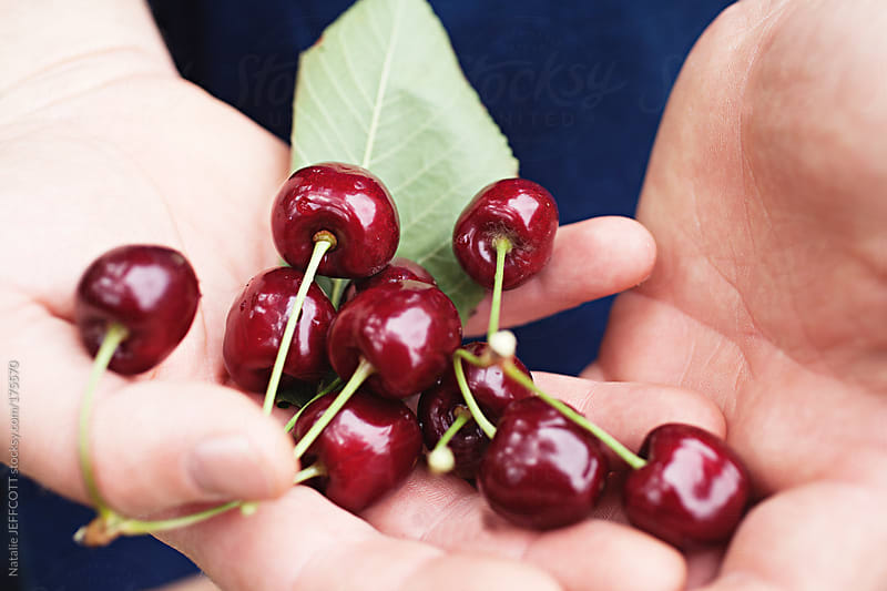 close up of hands holding freshly picked cherries from an orchard by Natalie JEFFCOTT for Stocksy United