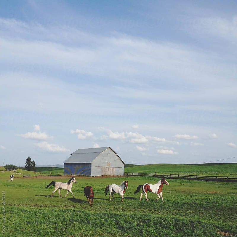 Farm Horses by Kevin Russ for Stocksy United