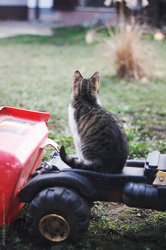 Young cat sitting on a truck toy by Jovana Rikalo for Stocksy United