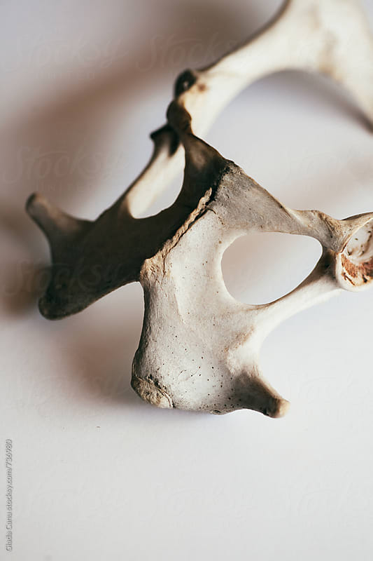Animal bones by Giada Canu for Stocksy United