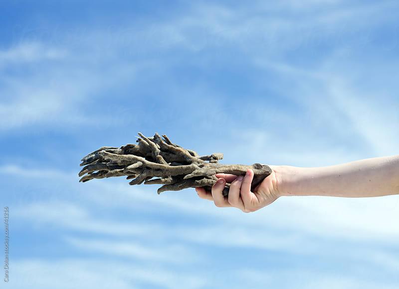 Child holds natural finger sea sponge against blue sky by Cara Dolan for Stocksy United