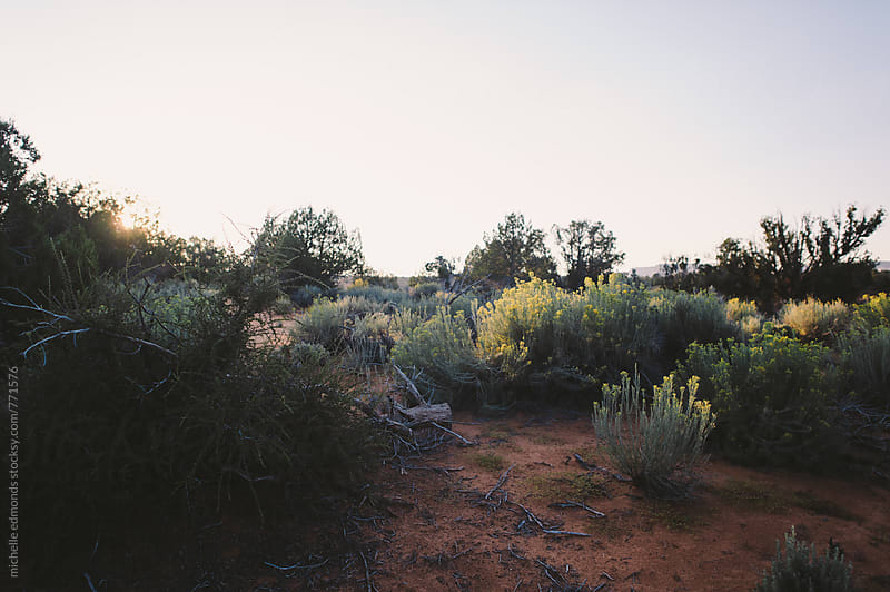 Desert Southwest Vegetation by michelle edmonds for Stocksy United