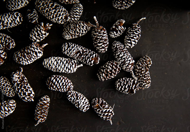 Pine cones decoration by Orsolya Bán for Stocksy United