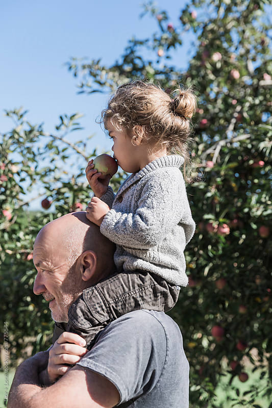 A toddler on his grandfather's shoulder eating an apple by Lior + Lone for Stocksy United