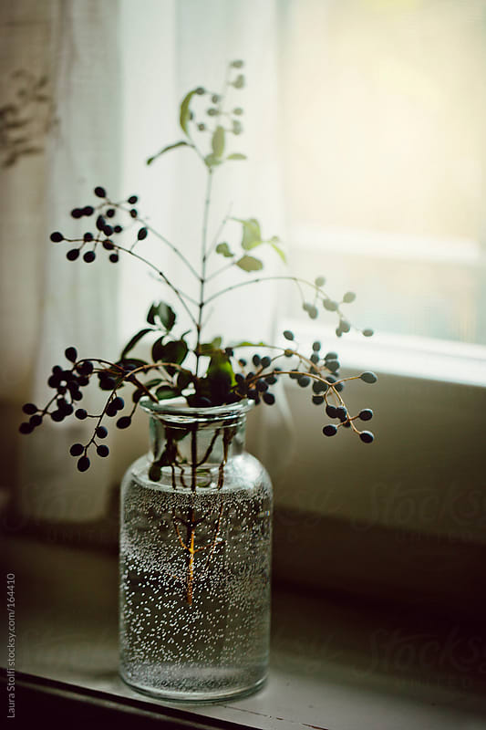 Glass jar with water full of bubbles and berries twig in it by Laura Stolfi for Stocksy United
