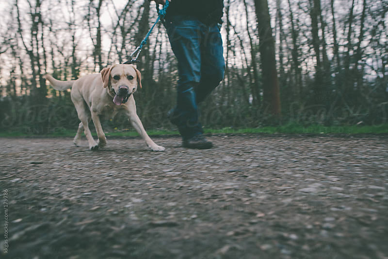 Dog and owner walking along a path. by kkgas for Stocksy United