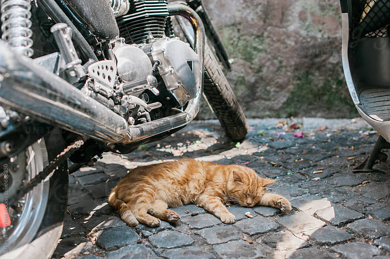 Sleeping Cat Under Motorcycle by Briana Morrison for Stocksy United