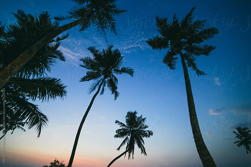 Palm trees on tropical beach seen from low angle at sunset by Alejandro Moreno de Carlos for Stocksy United