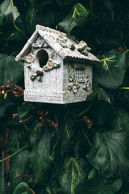 White bird box hanging on a wall of Ivy by Paul Phillips for Stocksy United