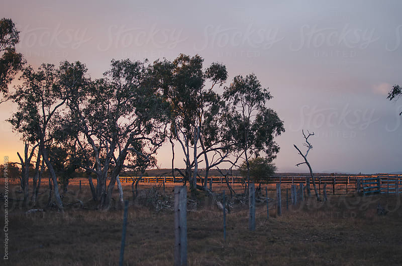 Cattle yard at sunset by Dominique Chapman for Stocksy United