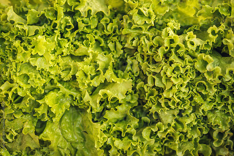 Green leaf lettuce at the local market by Helen Sotiriadis for Stocksy United