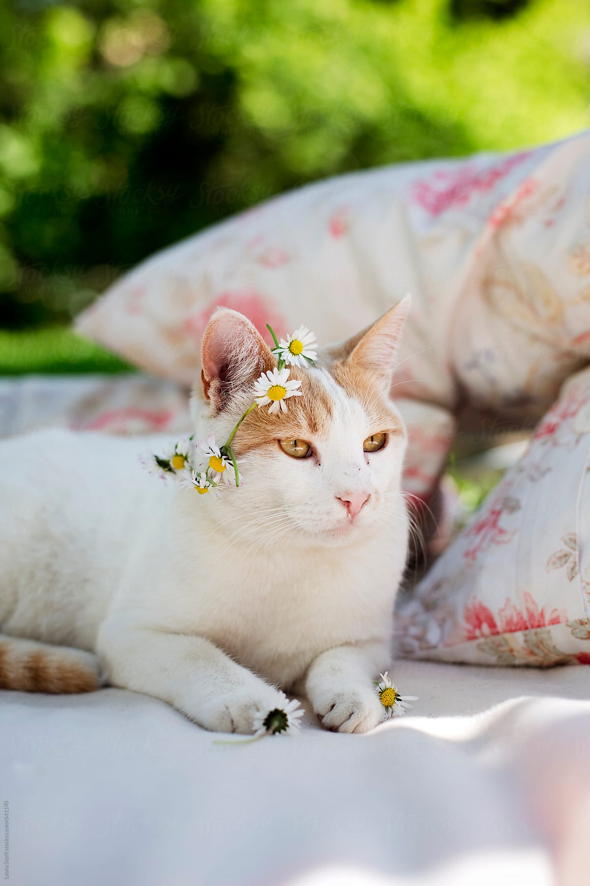 Cat With Flower Crown On The Head Stocksy United