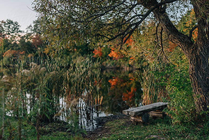 bench by a pond on an autumn evening by Deirdre Malfatto for Stocksy United