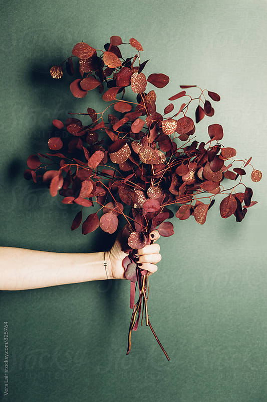 Hand holding a bouquet of red eucalyptus by Vera Lair for Stocksy United