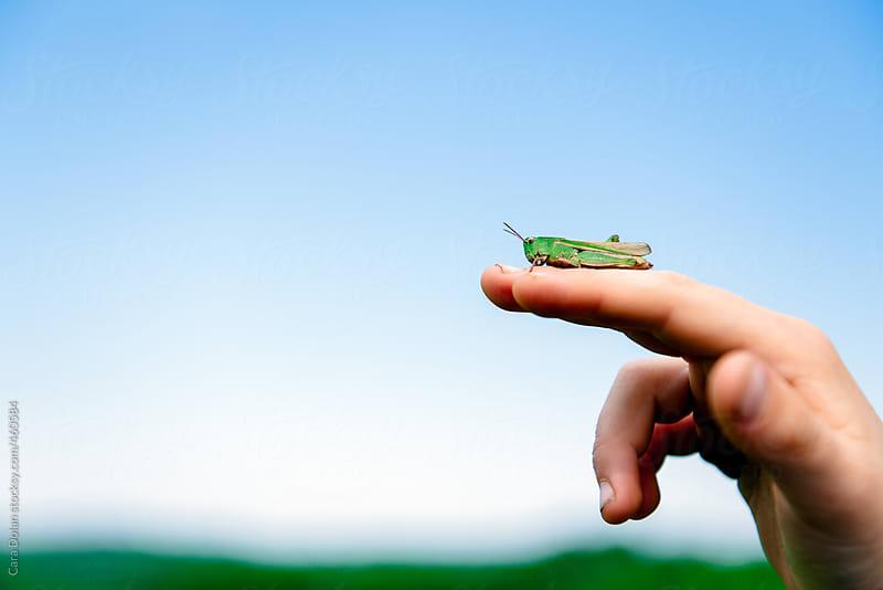 Child holds a grasshopper by Cara Dolan for Stocksy United