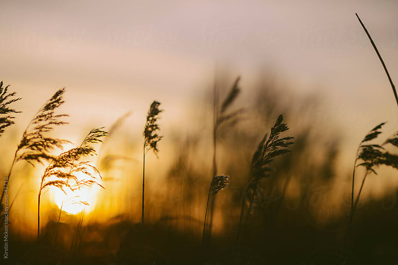 Tall grass by the sea at sunset in Norfolk, England by Kirstin Mckee for Stocksy United