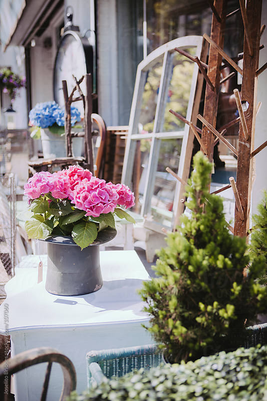 Antiques and Hydrangea Flowers in Outdoor  Flea Market by Joselito Briones for Stocksy United