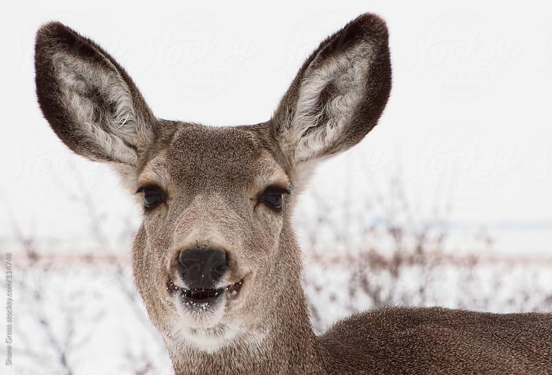 Happy Deer by Shane Gross for Stocksy United
