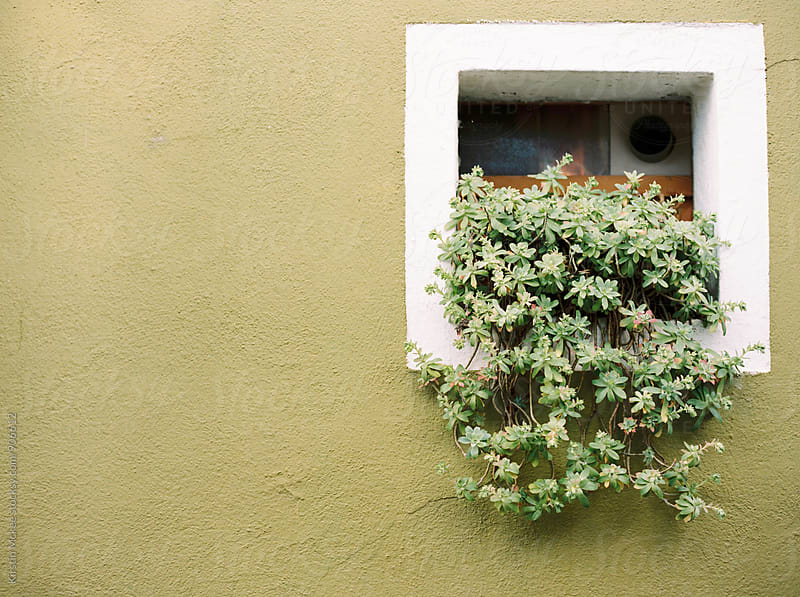 Window in Burano with plant by Kirstin Mckee for Stocksy United