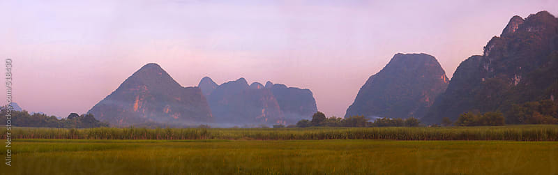 Stunning panorama of rice field and hills under pink sunset sky by Alice Nerr for Stocksy United