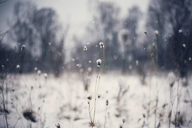 Snowy Field by ALICIA BOCK for Stocksy United