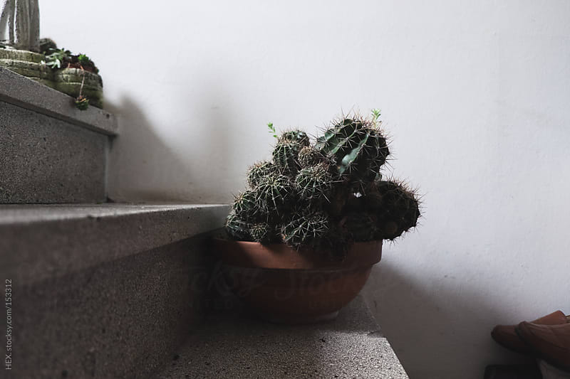 Succulent Plant on Stairs by HEX. for Stocksy United