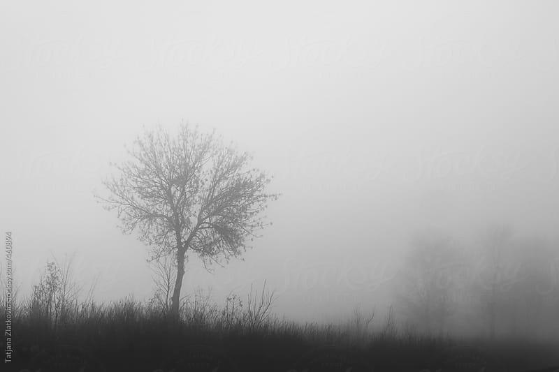 Tree in the fog by Tatjana Zlatkovic for Stocksy United