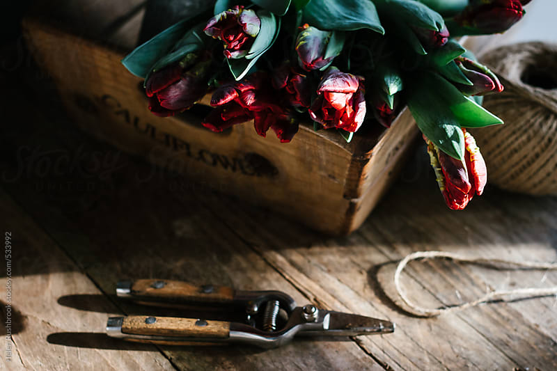 Parrot tulips in an old wooden box, with floristry tools. by Helen Rushbrook for Stocksy United
