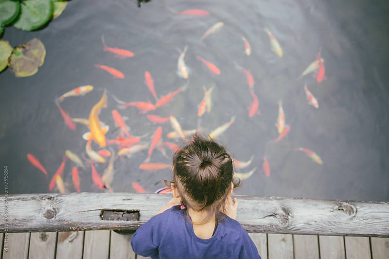 Toddler girl looking at goldfish in a pond by MaaHoo Studio for Stocksy United