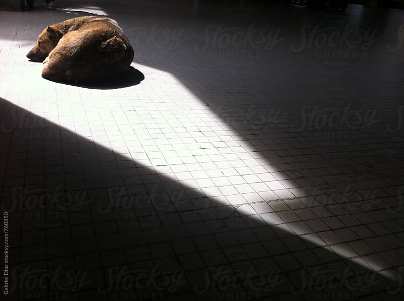 Dog sleeping in the sun in a dark room by Gabriel Diaz for Stocksy United