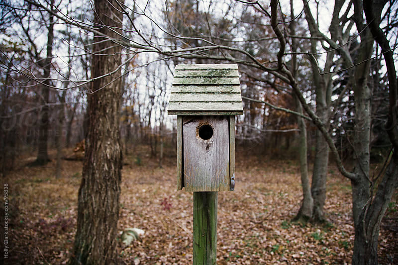 A forgotton birdhouse stands amongst trees in the woods. by Holly Clark for Stocksy United
